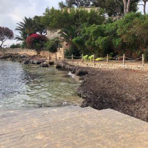 Cs Calvià denuncia la dejadez en la limpieza de algas de la calita de Son Caliu